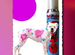 Dog decorated with purple and blue pet paint hearts