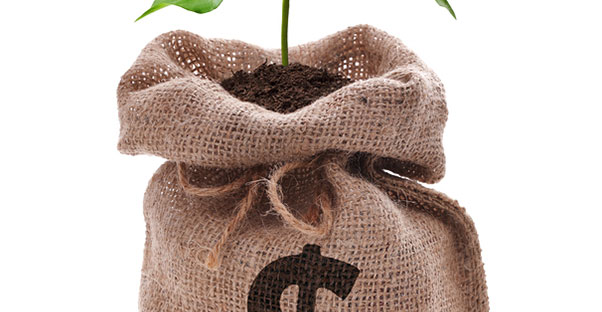Tree planted in a bag of money